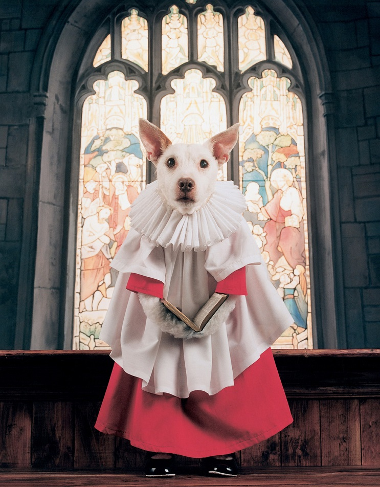 Perro posa para su dueño y es la imagen de sus postales 13