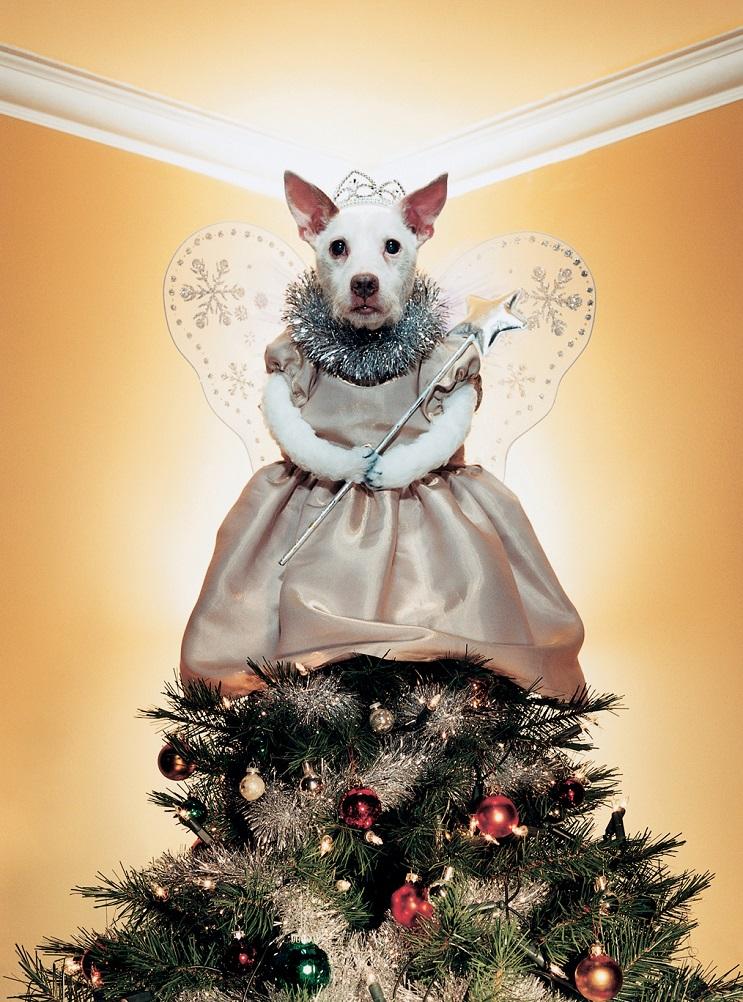 Perro posa para su dueño y es la imagen de sus postales 14