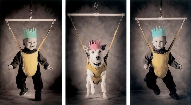Perro posa para su dueño y es la imagen de sus postales 15
