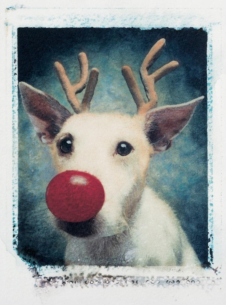 Perro posa para su dueño y es la imagen de sus postales 3