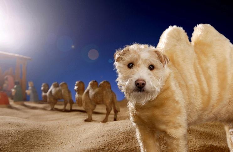 Perro posa para su dueño y es la imagen de sus postales 4