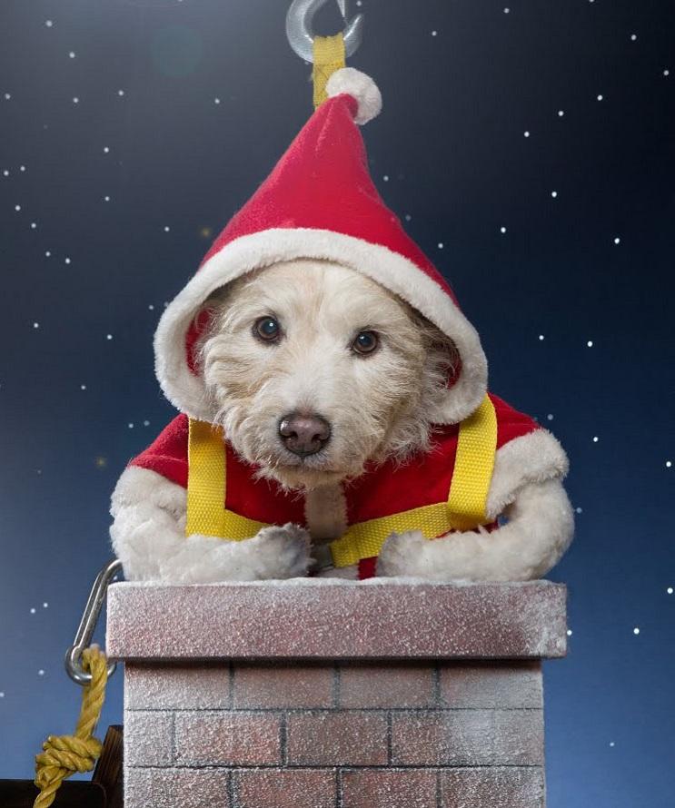 Perro posa para su dueño y es la imagen de sus postales 5