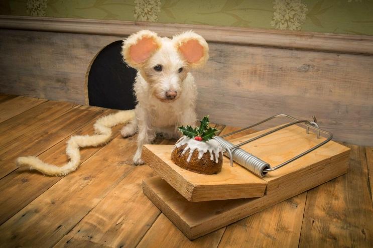 Perro posa para su dueño y es la imagen de sus postales 6
