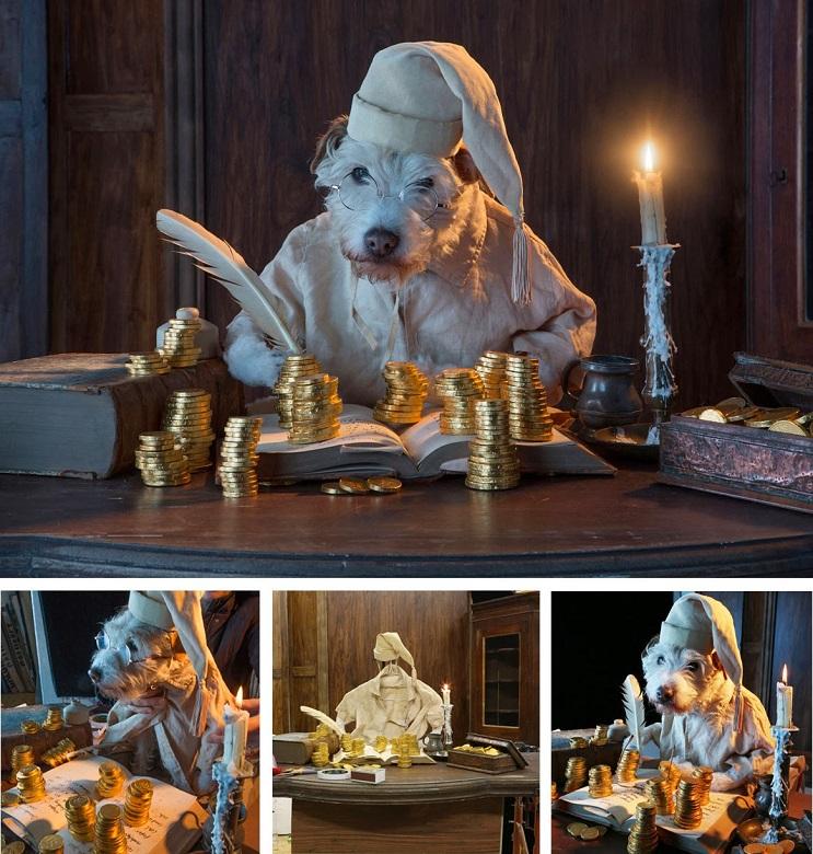 Perro posa para su dueño y es la imagen de sus postales 9