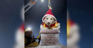 Perro posa para su dueño y es la imagen de sus postales navideñas cada año