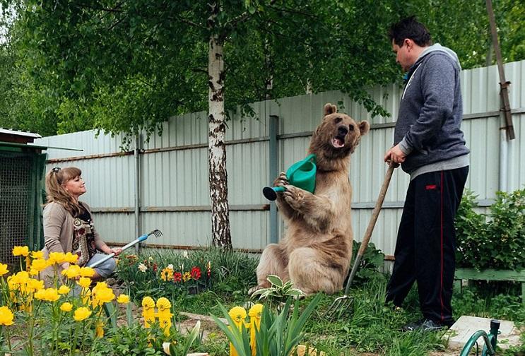 Se imaginan teniendo un oso como mascota Esta pareja lo tiene 10