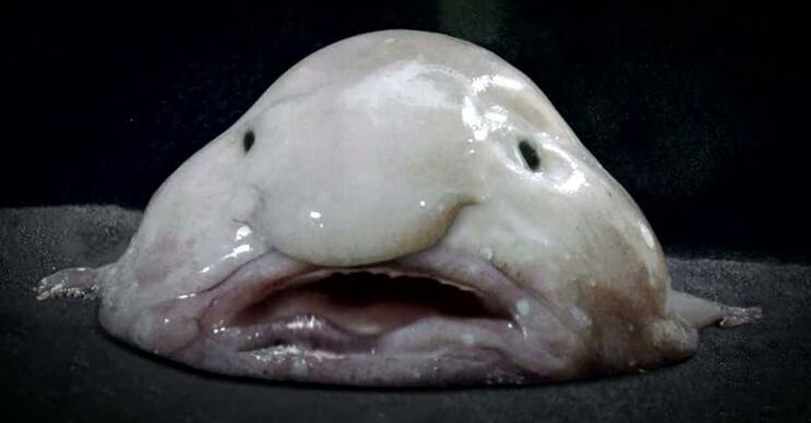 Los 10 animales marinos más raros del mundo - mott.pe