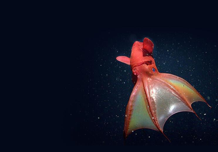animales marinos raros9