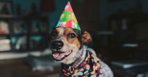 Las 20 tortas más creativas para engreír a tu perro