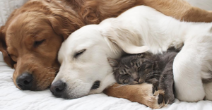 Mira el adorable e inusual trío que forman estas mascotas