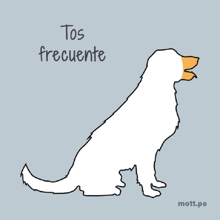 11 cosas esenciales que debes saber si eres dueño de un perro 04