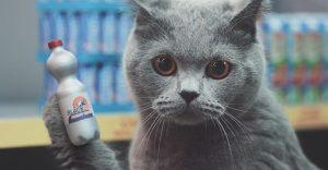 Netto-Katzen: un supermercado en miniatura para gatos