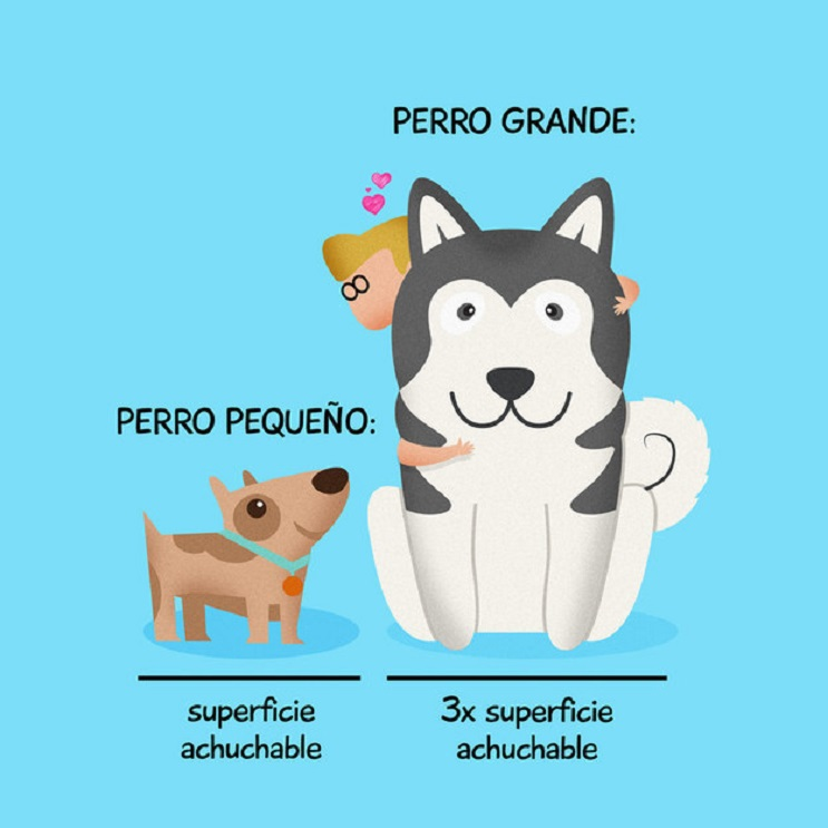 9 situaciones que toda persona con un perro identificará 04