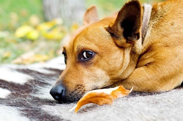 Abandonar a tu perro en una perrera no debe ser siquiera una opción 01