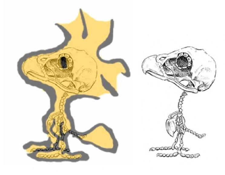 Así es como se verían los esqueletos de algunos personajes del mundo animado 08