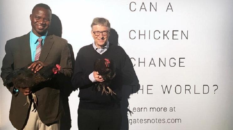 Bill Gates donó 100 mil gallinas y ¡Bolivia las rechazó! 3