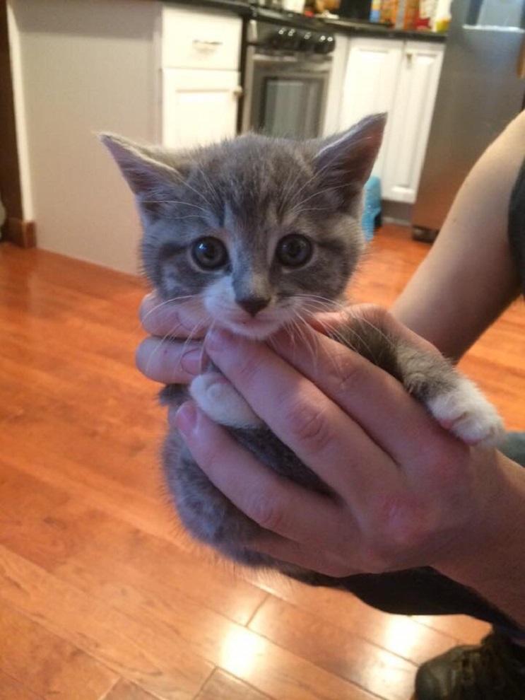 Conoce a este gatito que encontró hogar con toda la dulzura que derrocha 01