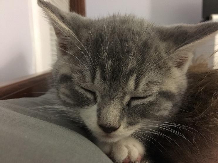 Conoce a este gatito que encontró hogar con toda la dulzura que derrocha 07