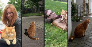 """Conoce al """"gato del campus"""" y descubre como ayuda a los estudiantes de esta universidad"""