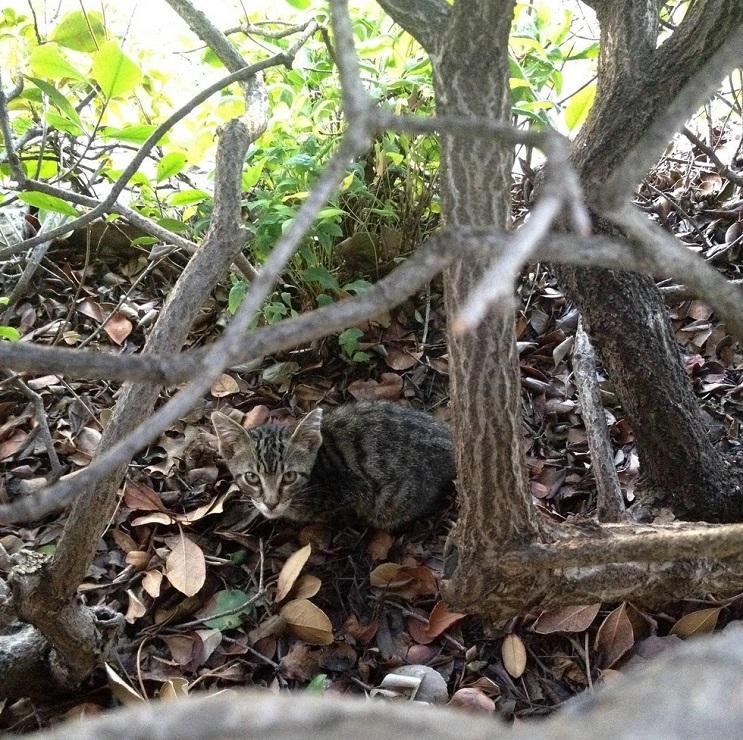 Del más tímido al más amoroso Conoce la historia de este pequeño felino rescatado 03