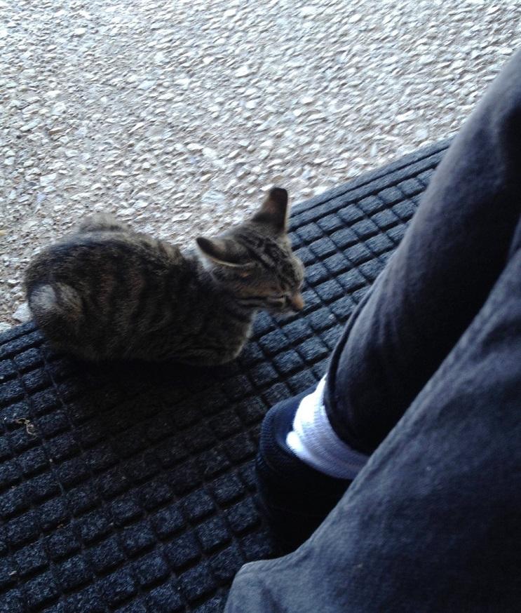 Del más tímido al más amoroso Conoce la historia de este pequeño felino rescatado 04