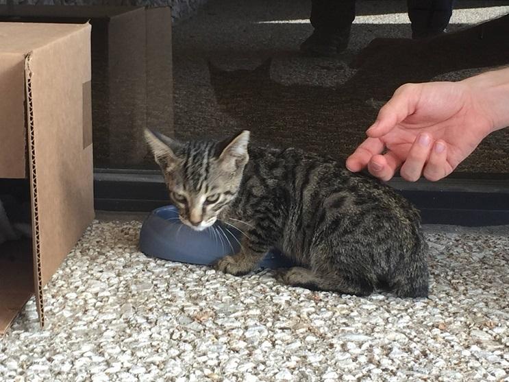 Del más tímido al más amoroso Conoce la historia de este pequeño felino rescatado 06