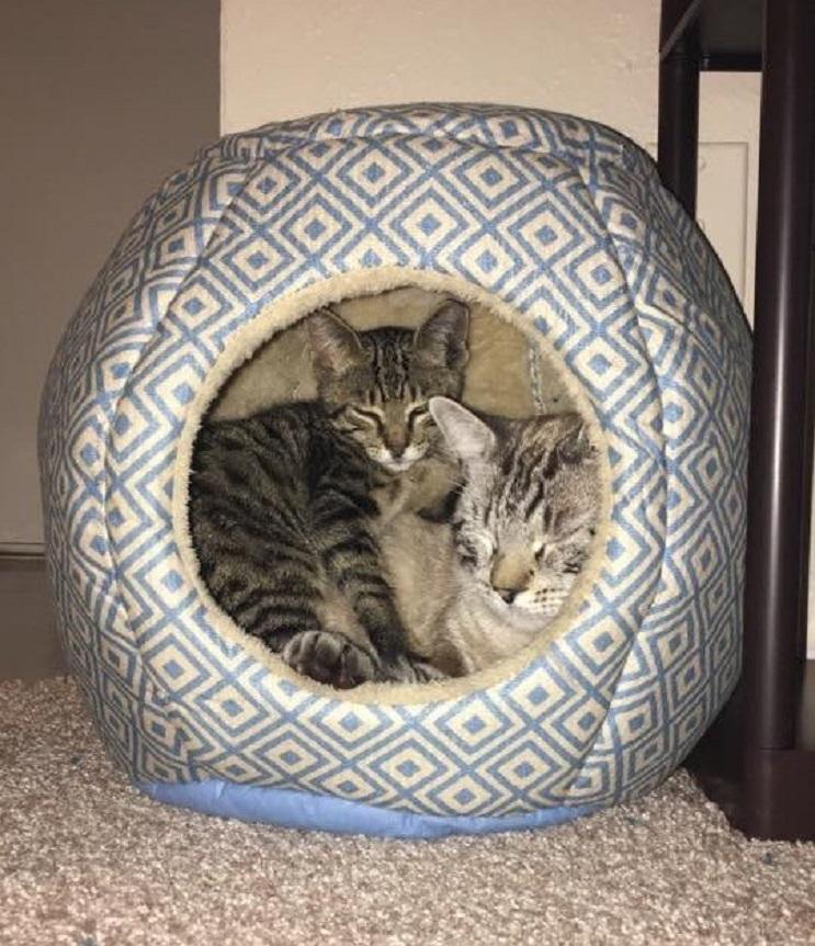 Del más tímido al más amoroso Conoce la historia de este pequeño felino rescatado 12