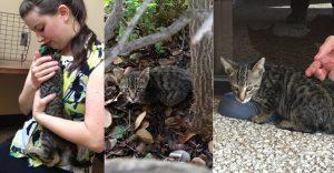 Del más tímido al más amoroso: Conoce la historia de este pequeño felino rescatado