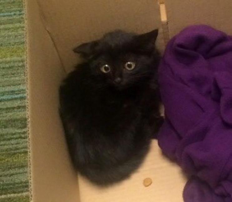 El amor de sus rescatistas ayudó a este gatito asustado 01