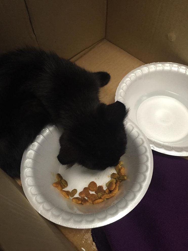 El amor de sus rescatistas ayudó a este gatito asustado 04