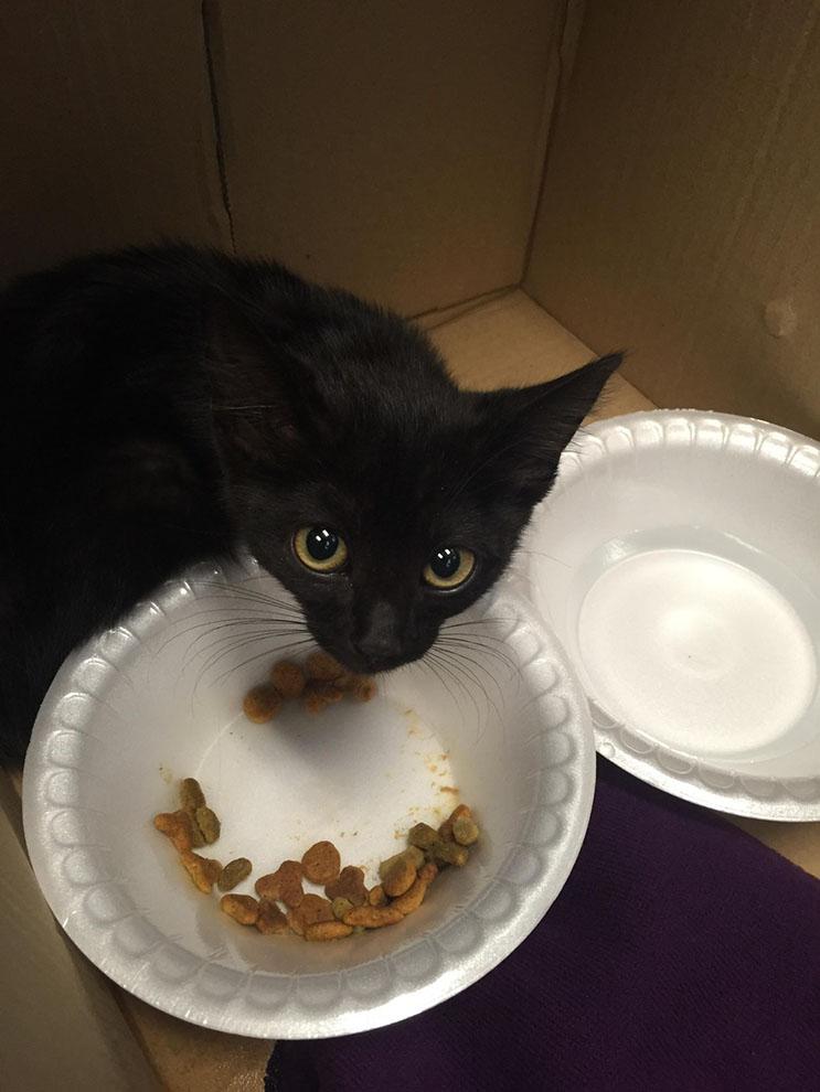El amor de sus rescatistas ayudó a este gatito asustado 05