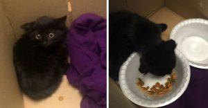Este gatito asustado logra superar su miedo gracias al cariño de sus rescatistas
