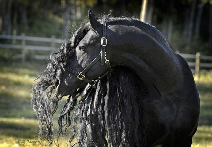 Es-este-el-caballo-más-bello-del-mundo-02