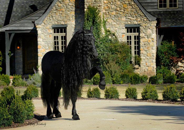 Es-este-el-caballo-más-bello-del-mundo-04-1