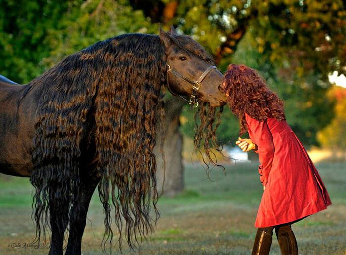 Es-este-el-caballo-más-bello-del-mundo-05-1