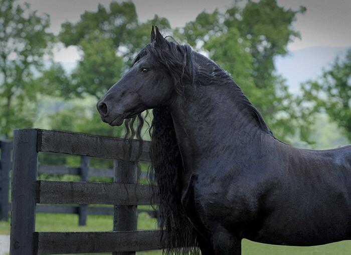 Es-este-el-caballo-más-bello-del-mundo-06-1