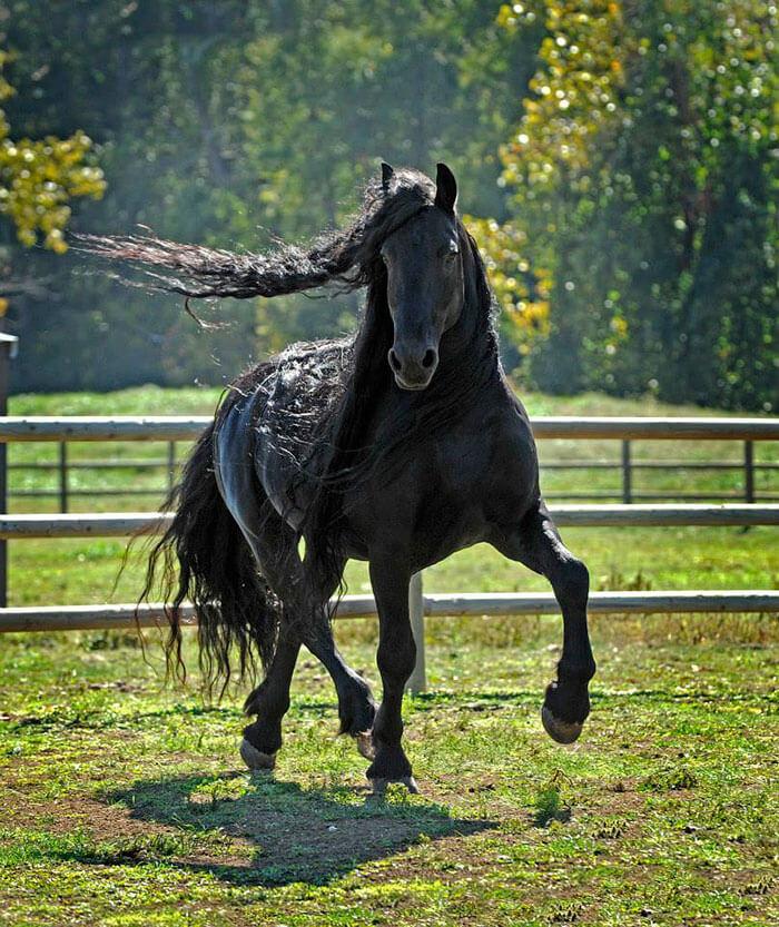 Es-este-el-caballo-más-bello-del-mundo-09-1