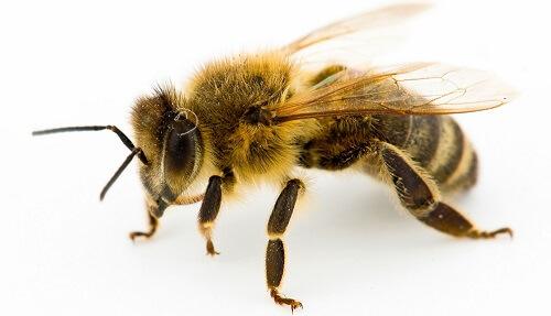 Esta abeja agradece al hombre que la salvó de la manera más inusual 01