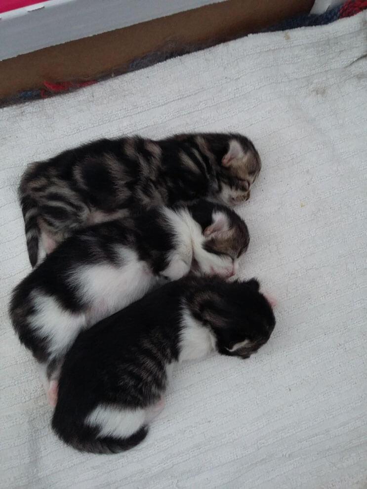 Esta familia capturó el preciso momento en que este gato entró a sus vidas 05