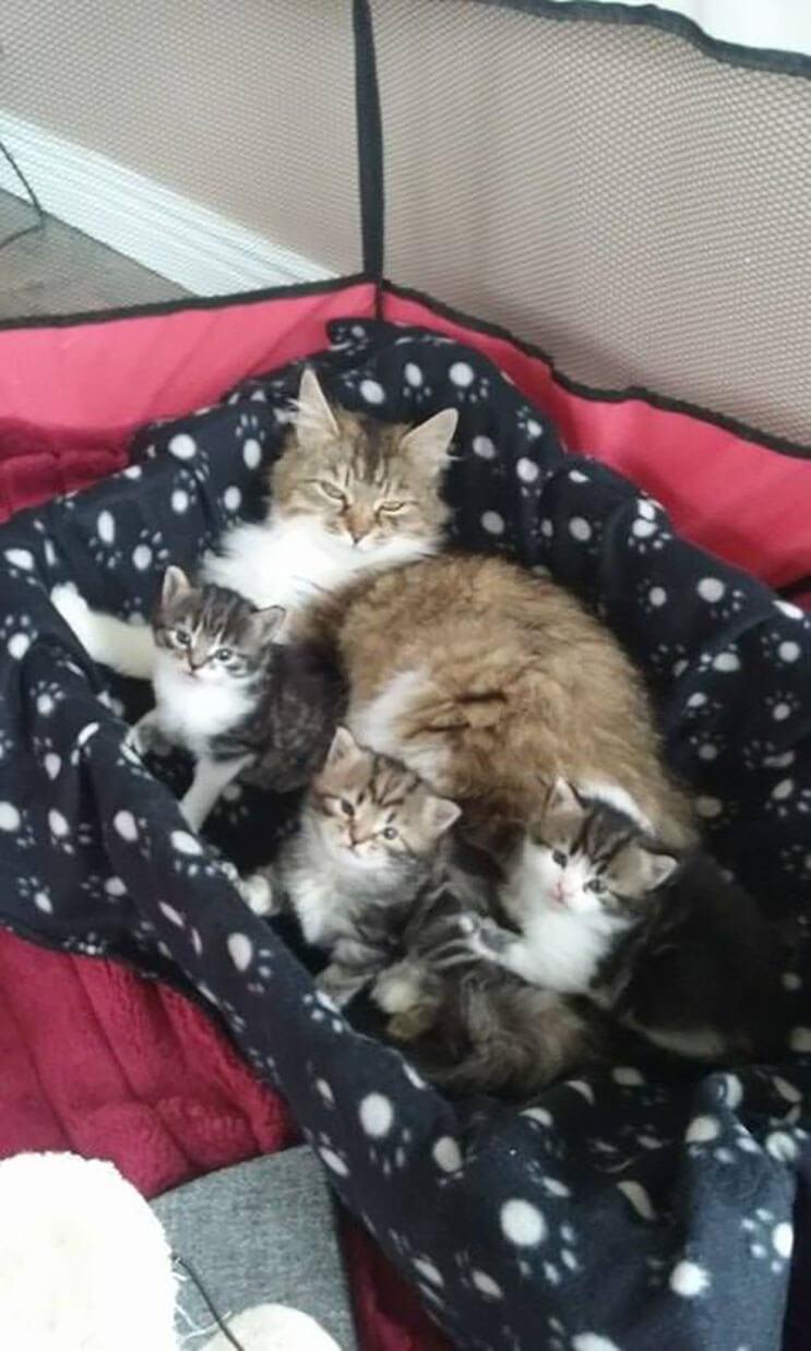 Esta familia capturó el preciso momento en que este gato entró a sus vidas 07