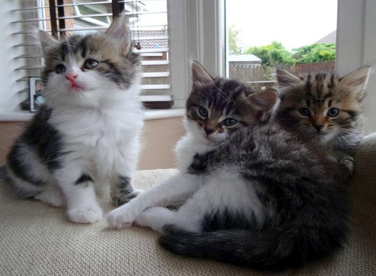 Esta familia capturó el preciso momento en que este gato entró a sus vidas 08