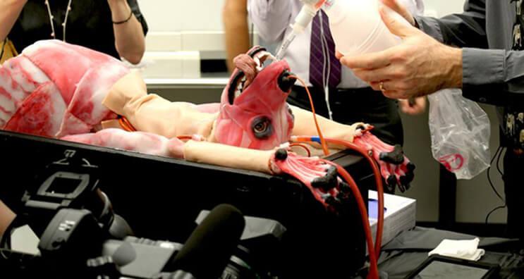 Esta invento podría salvar la vida de miles de perros2