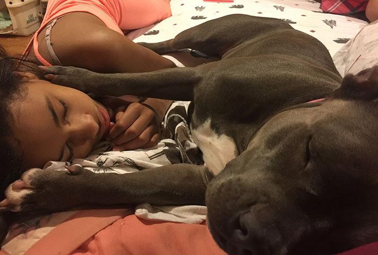 Esta niña con Asperger fue separa de su perro de ayuda hace 1 año. Ahora buscan nuevo hogar 02