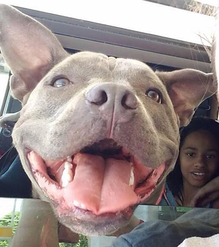 Esta niña con Asperger fue separa de su perro de ayuda hace 1 año. Ahora buscan nuevo hogar 05