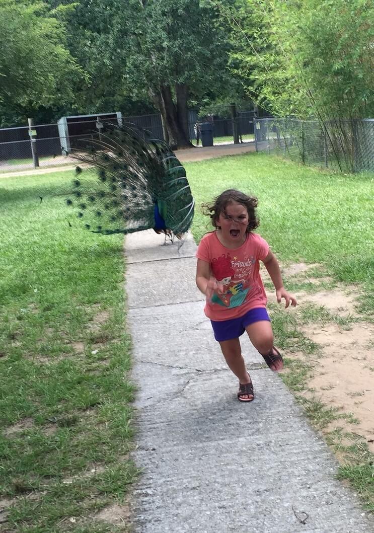 Esta niña escapa de este pavo real y los cibernautas se encargaron de hacer lo suyo 02