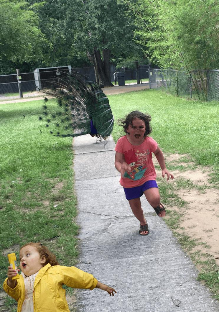 Esta niña escapa de este pavo real y los cibernautas se encargaron de hacer lo suyo 07