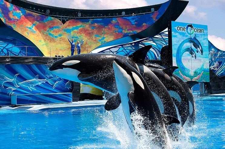 Esta orca en cautiverio se habría tratado de suicidar frente al público 002