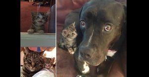 Esta pequeña gata fue rescatada y obtuvo un nuevo hogar y una nueva mamá