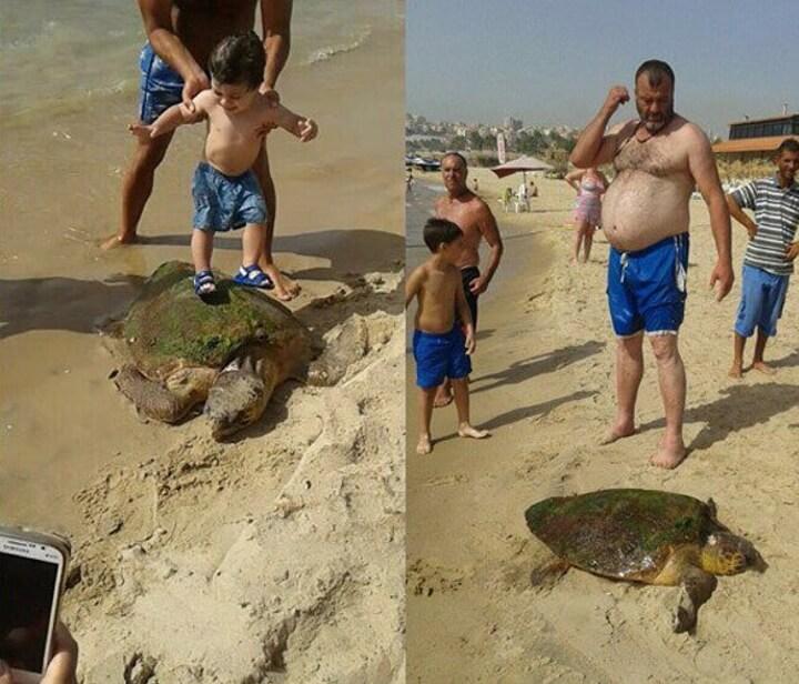 Estas personas casi matan a esta tortuga cuando la sacaron del mar para tomarse selfies 01