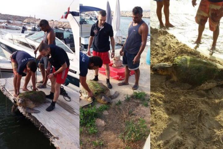 Estas personas casi matan a esta tortuga cuando la sacaron del mar para tomarse selfies 04